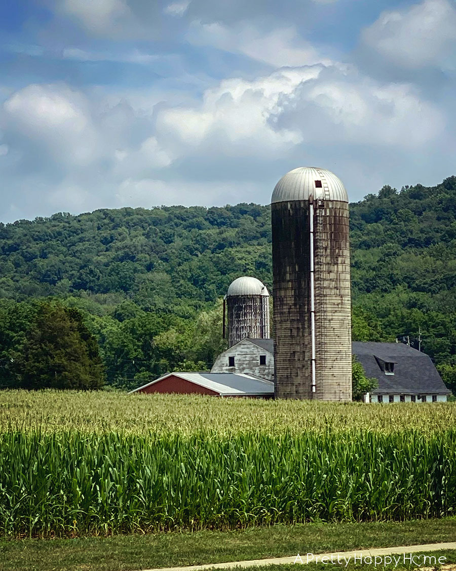 cornfield in new jersey on the happy list