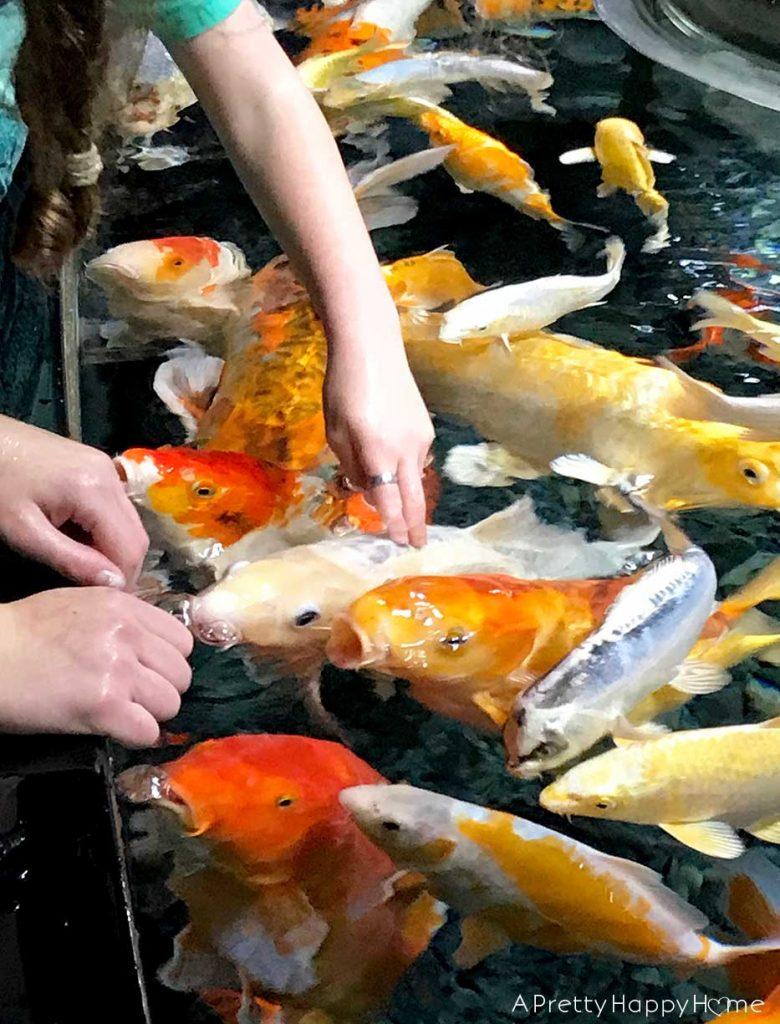 paris aquarium touch tank on the happy list