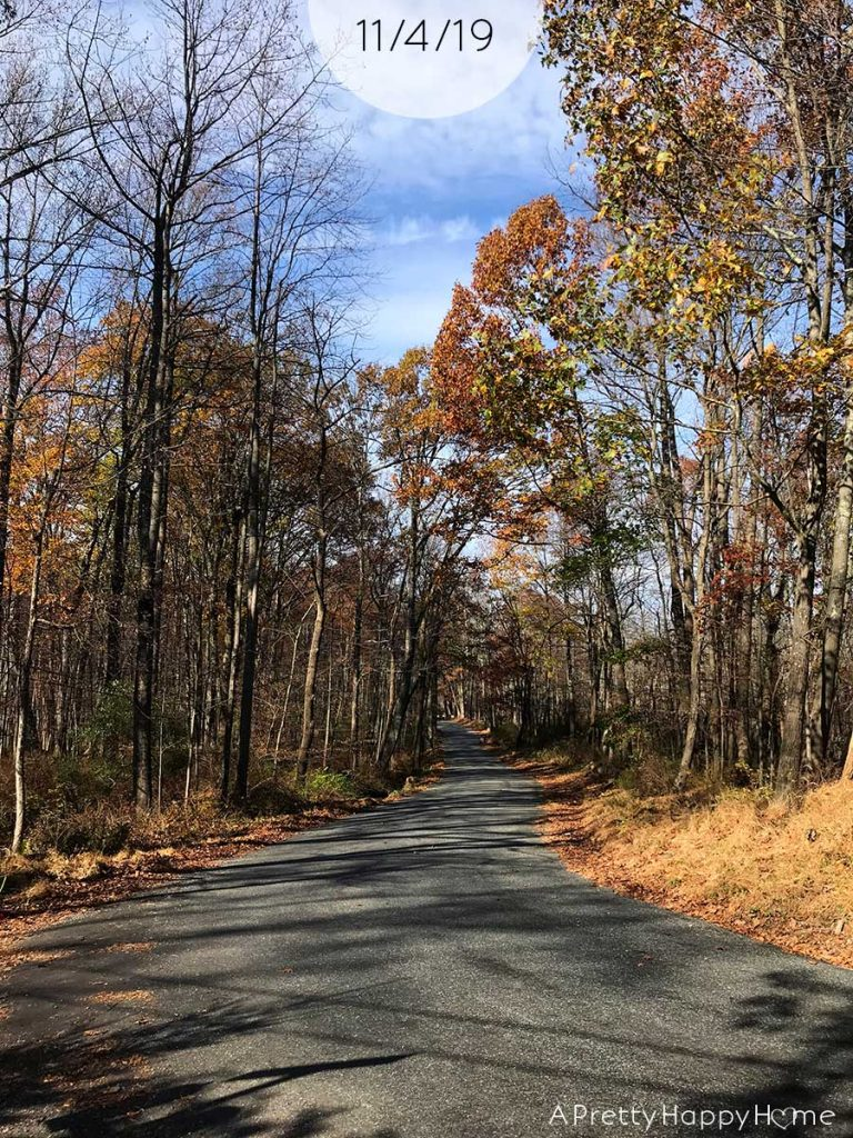 fall colors in new jersey november 4 2019