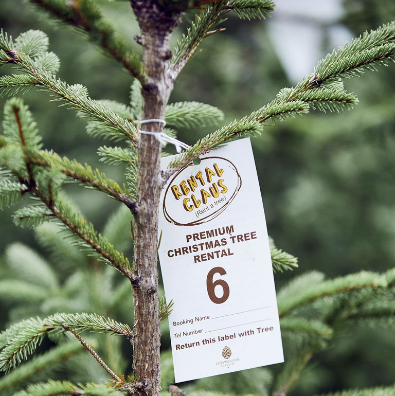 rent a christmas tree rental claus via country living on the happy list