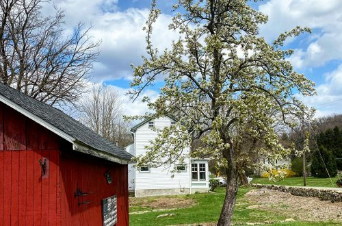 colonial farmhouse pear tree spring 2020 on the happy list