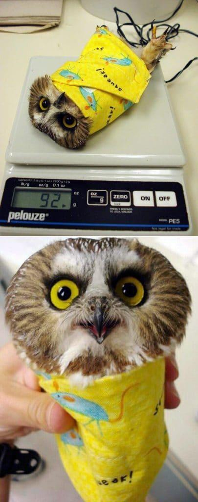 owl burrito via sad and useless on the happy list