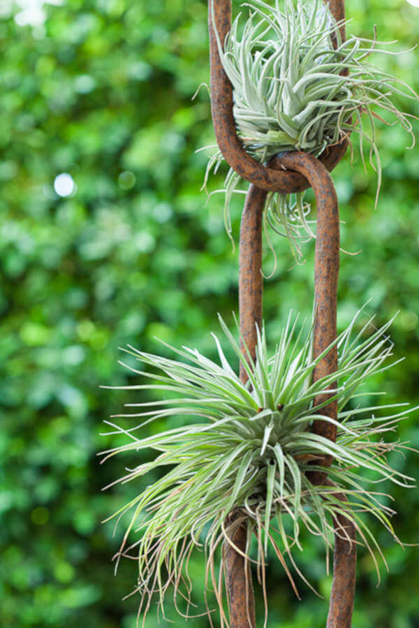air plants on a chain via desire to inspire on the happy list
