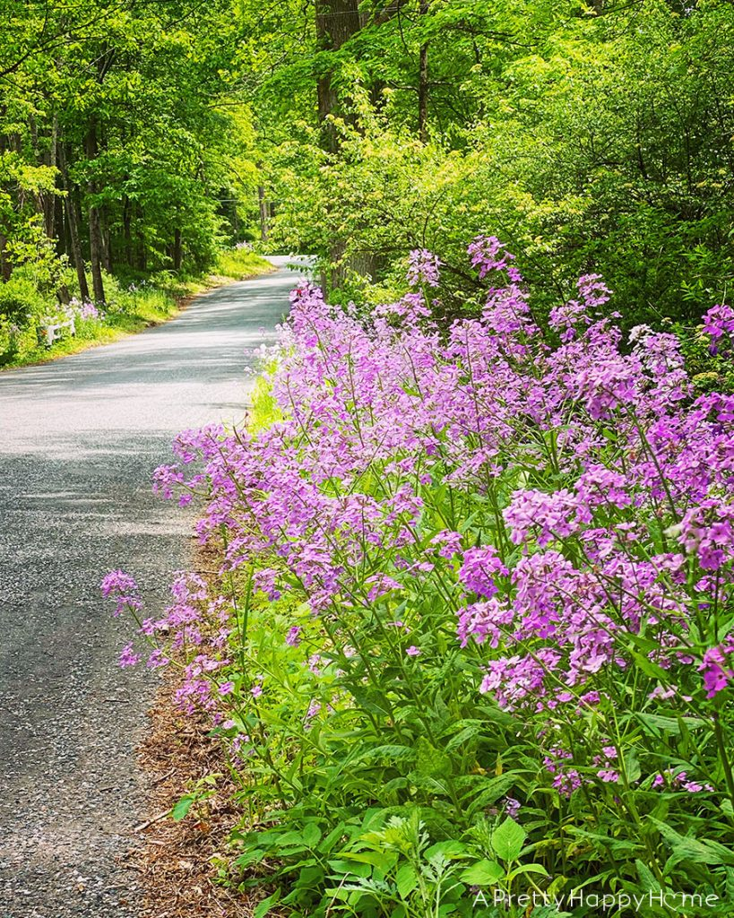 flowers on county road summer bucket list: covid-19 edition