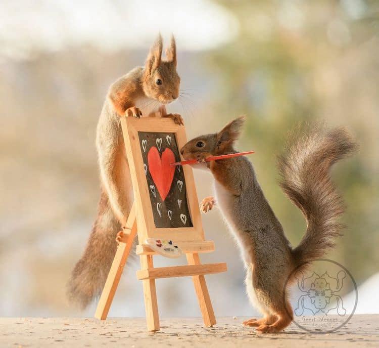 squirrel photos geert weggen via my modern met on the happy list