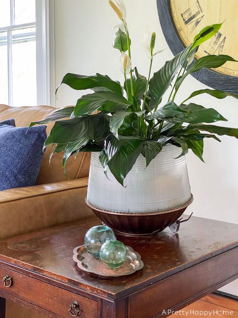 Repurposed Light Shade Planter