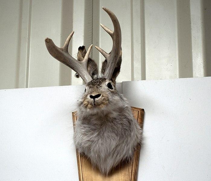 jackalope hoax via wikimedia