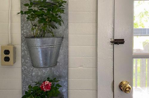 roses in galvanized planter