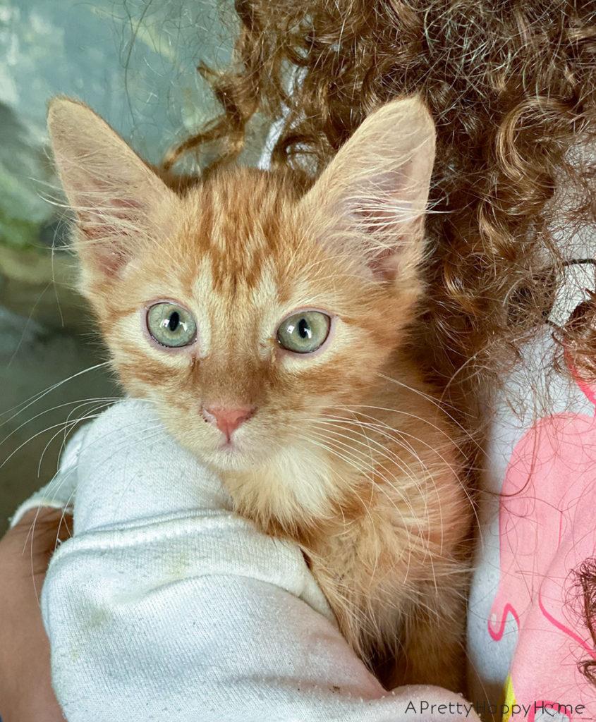 orange cat sunny on the happy list