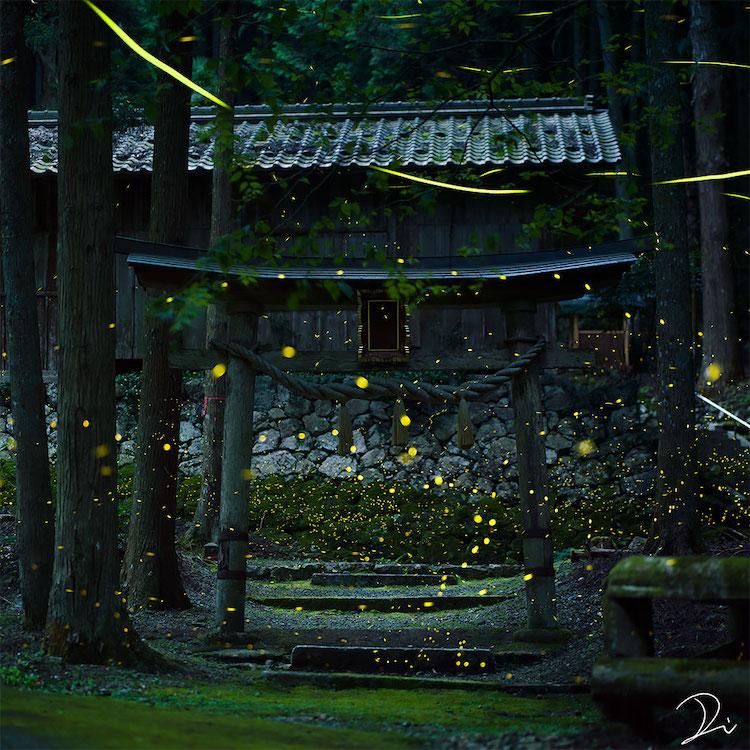 via my modern met Japanese photographer Usadadanuki fireflies on the happy list